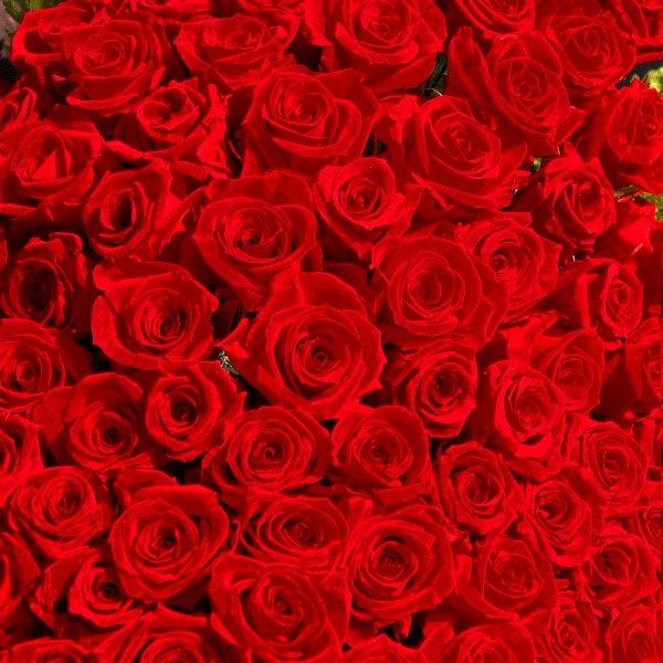 画像1: 花言葉 100%の愛 【近江八幡市内へのお届け商品】バラの花束100 (1)
